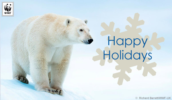 holiday donation ecard polar bear