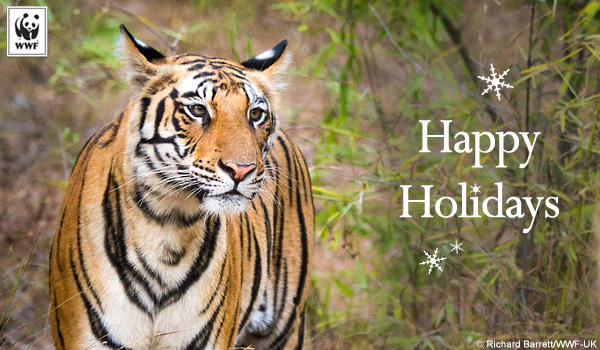 holiday donation ecard tiger
