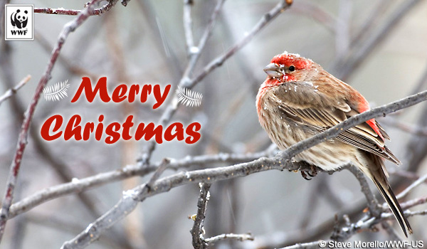 Holiday Ecard finch