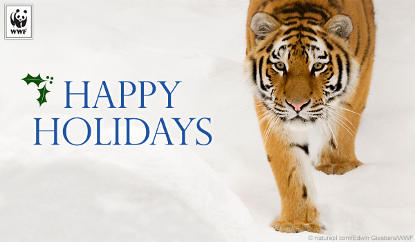 tiger holiday ecard