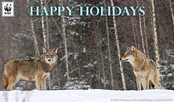 Holiday ecard wolves