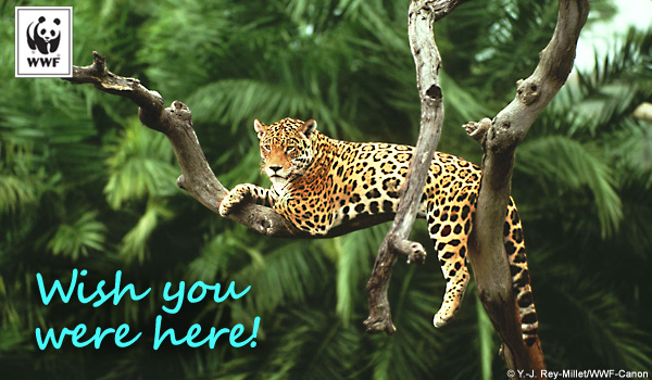 occasion ecard jaguar wish
