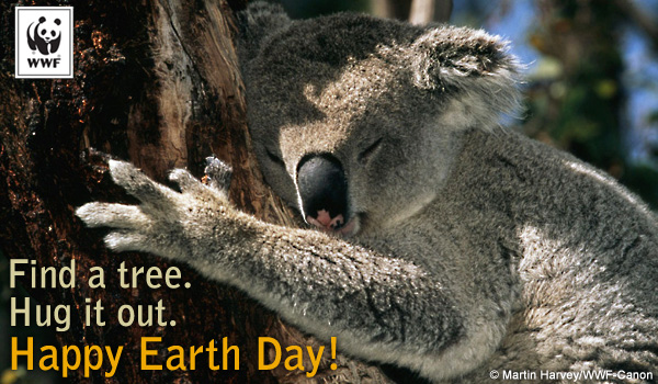 Earth Day Ecard Koala