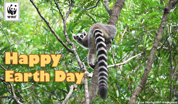 Earth Day ecard Lemur