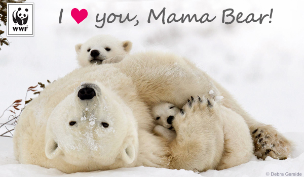 mothers day ecard polar bear