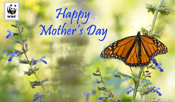 Mother's Day ecard butterfly