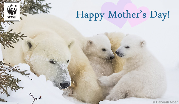 Mother's Day ecard polar bear