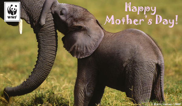 Mothers Day ecard elephants