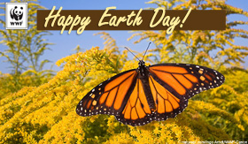 Earth Day ecard Monarch