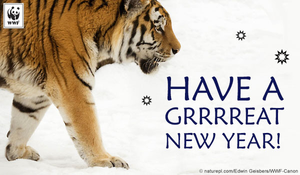 Holiday Ecard tiger