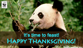 Thanksgiving Ecard - Panda