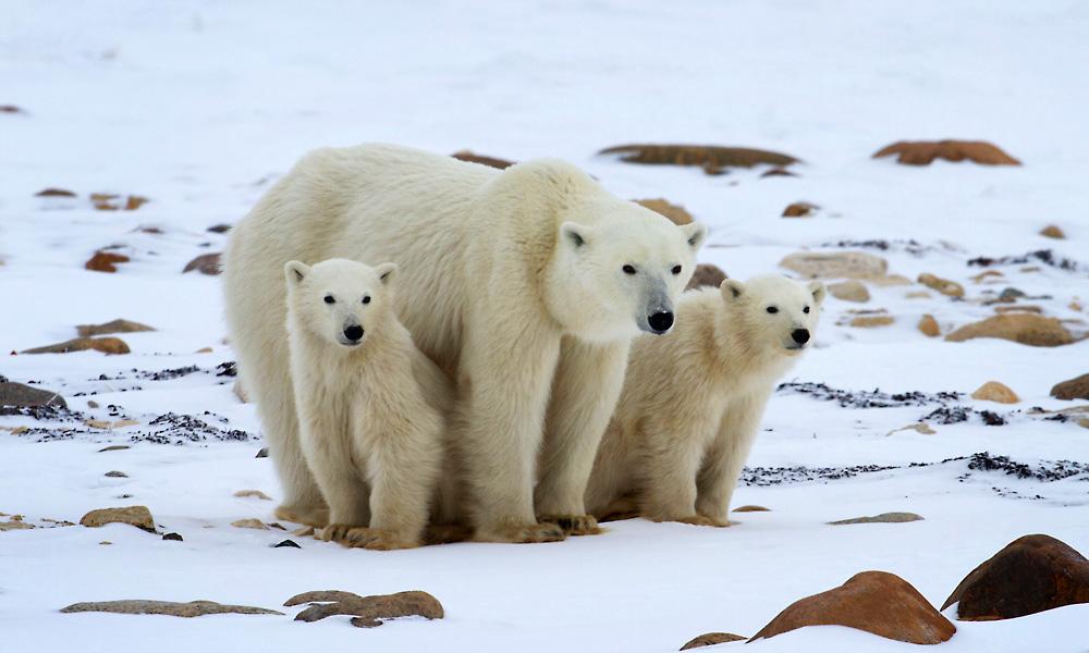 Polar Bear Adventure Sweepstakes | World Wildlife Fund