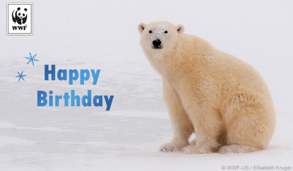 birthday donation ecard polar bear