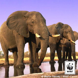 Right click on the African Elephants image to Save Picture As