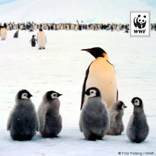 Right click on the Penguins image to Save Picture As