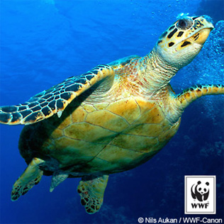 Right click on the Sea Turtle image to Save Picture As
