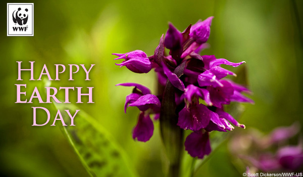 Earth Day Ecard Purple Flower