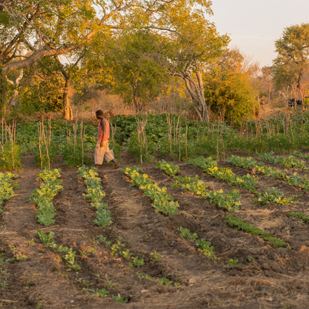 Namibian Farm