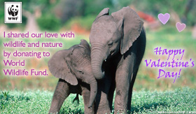 Vday ecard donation elephants sm