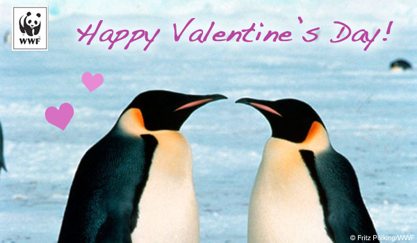 Valentine's Day donation ecard penguins