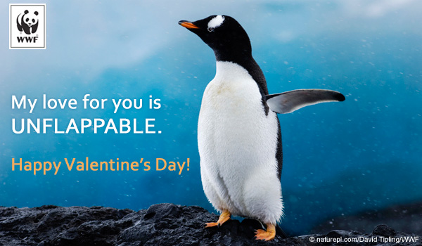 Valentine WWF Free Ecards – Send Valentines Card Free