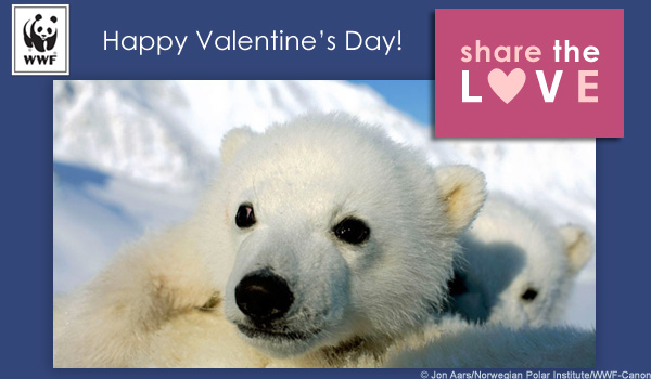 vday ecard polar bear love