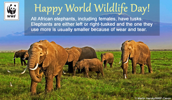 world wildlife day ecard elephants