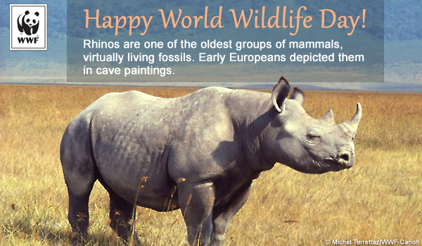 world wildlife day ecard rhino