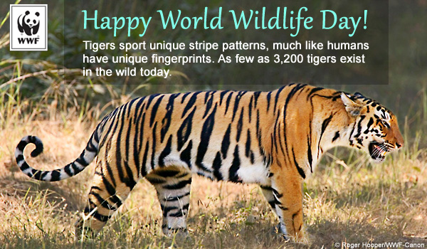 world wildlife day ecard tiger