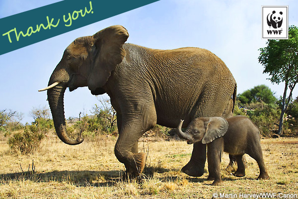 Thank a Ranger - Elephants